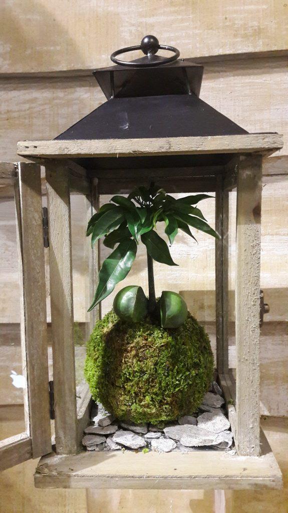 Terrarium-fleuriste-paris