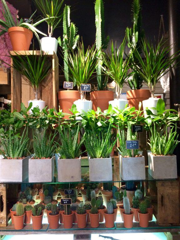 Plantes intérieures Christian Morel