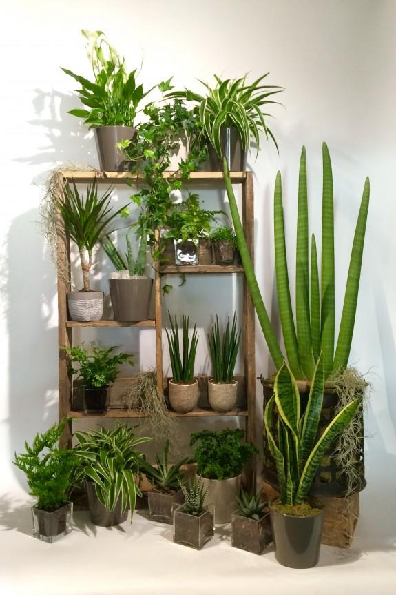 Plantes dépolluantes Christian Morel