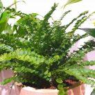 Christian Morel Fleuriste Paris - Plantes Dépolluantes Kit Senior