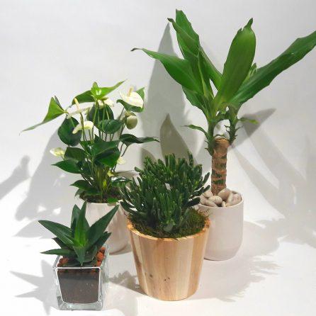 Christian Morel Fleuriste Paris – Plantes Dépolluantes Kit Junior
