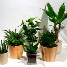 Christian Morel Fleuriste Paris - Plantes Dépolluantes Kit Medium
