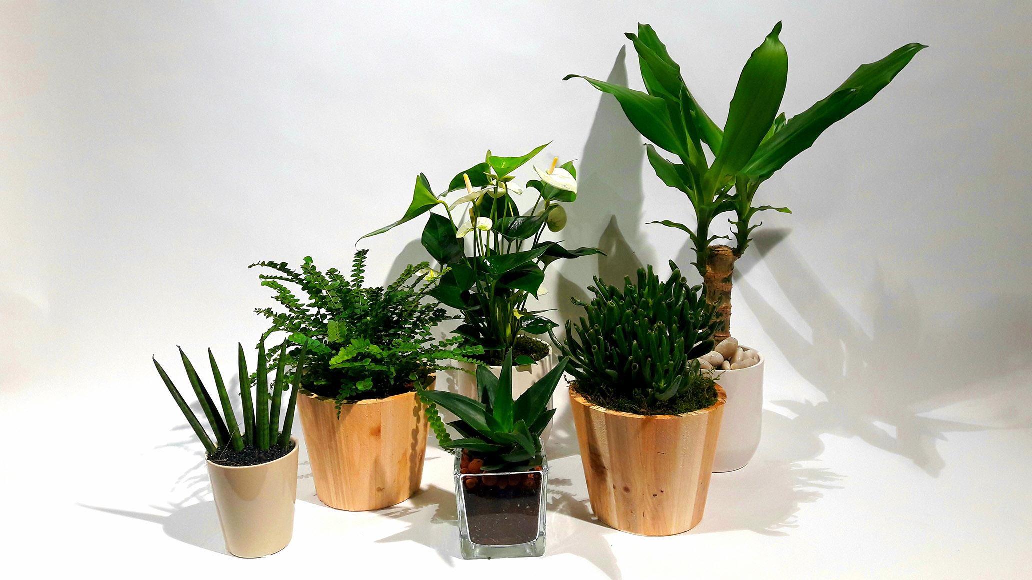 Christian Morel Fleuriste Paris - Plantes Dépolluantes Kit Medium
