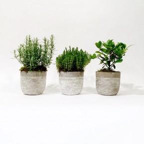 Christian Morel Fleuriste Paris - Plantes aromatiques