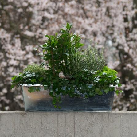 Jardinière « L'Aromatique 2 » par Christian Morel Fleuriste à Paris