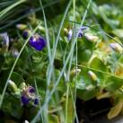 Jardinière « Blue Velvet » par Christian Morel Fleuriste à Paris - zoom 5