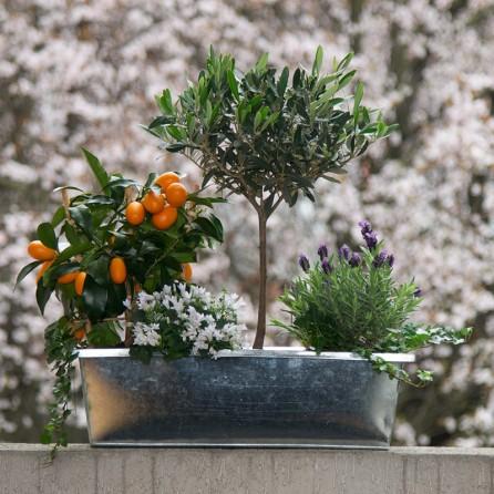 Jardinière « Méditerranée » par Christian Morel Fleuriste à Paris