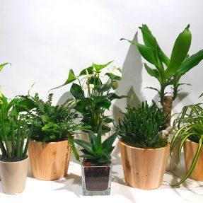 Christian Morel Fleuriste Paris - Plantes Dépolluantes