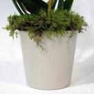 Christian Morel Fleuriste Paris - Yoko, Leiko, Phalaenopsis Blanche