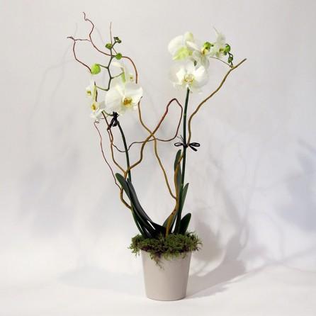 Christian Morel Fleuriste Paris – Yoko, Phalaenopsis Blanche